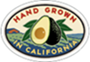 Square thumb about avocados new 3