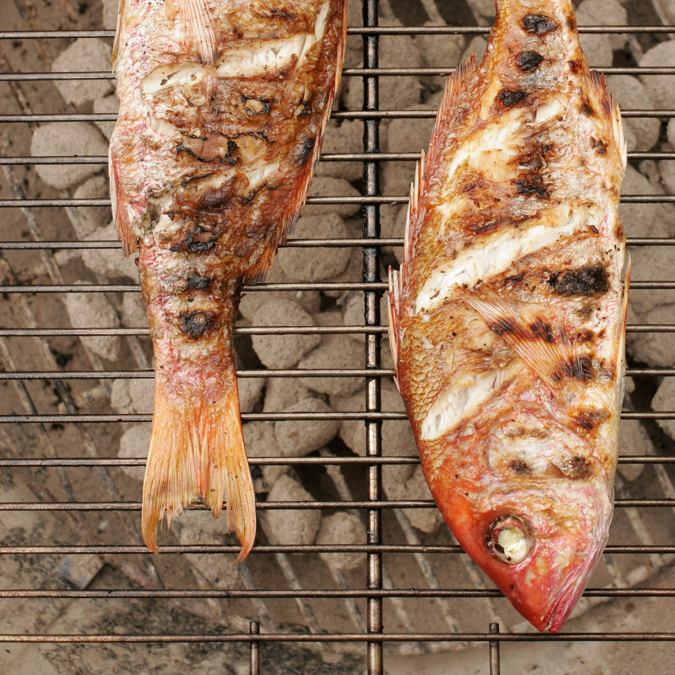 recipe: how to grill red snapper fillets on gas grill [22]