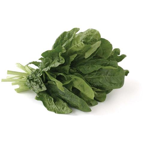 Lettuce Teach You: A Rundown on 14 Common Greens