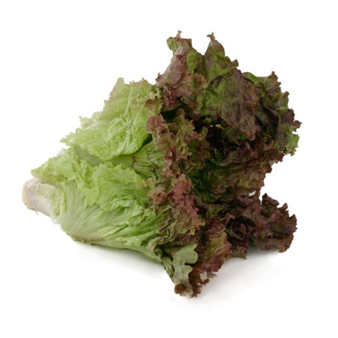 Lettuce Teach You A Rundown On 14 Common Greens