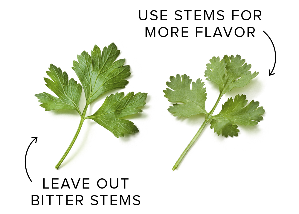 parsley and cilantro stems cook s illustrated